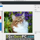 Balsamiq Mockups 3.5.16 Free Download